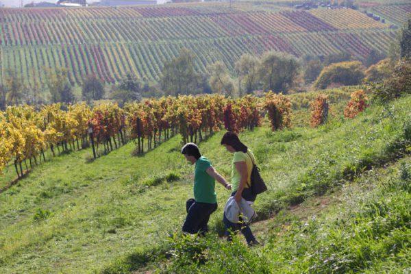 Zwei Wanderer gehen durch die bunten Weinberge
